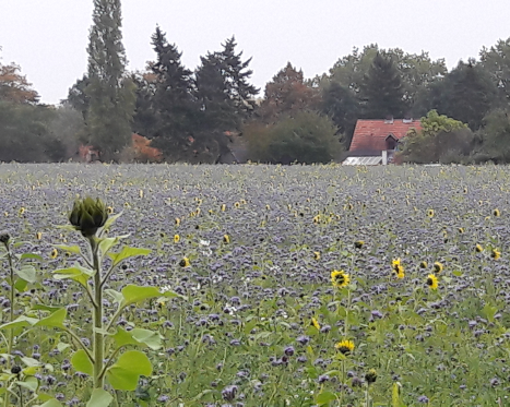 Meadow at the Lower Rhine